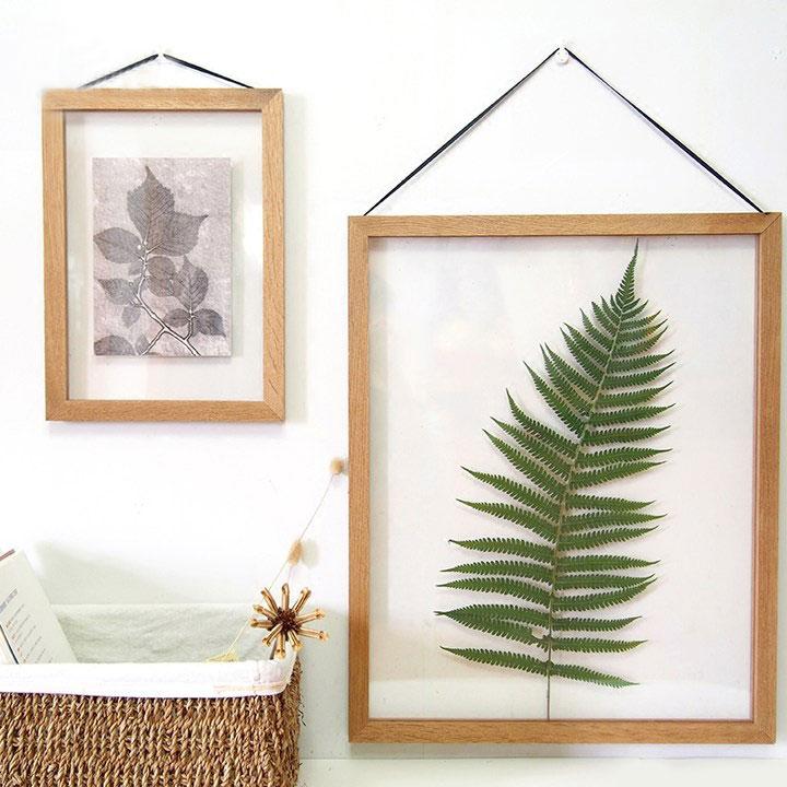 清新植物标本装饰画