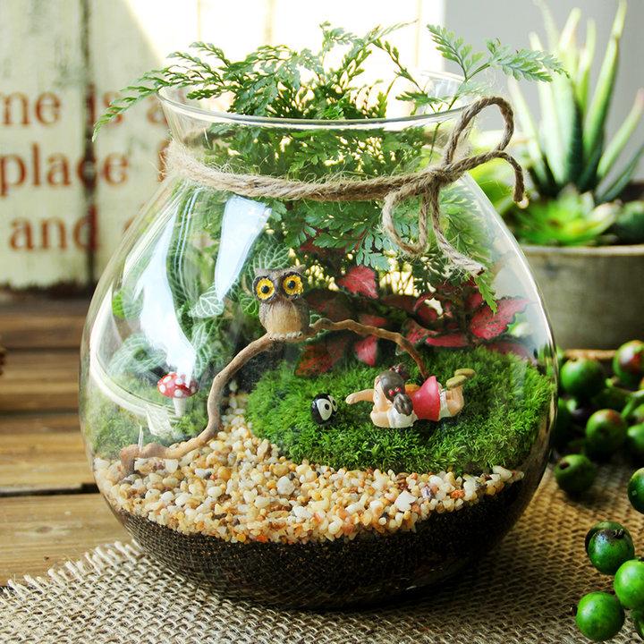 苔藓微景观植物生态瓶
