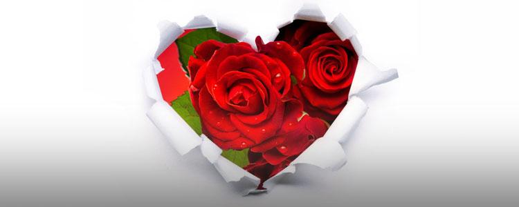 红玫瑰替你用心说爱