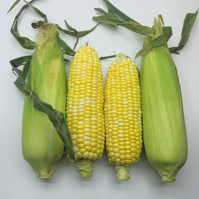 云南水果玉米 5斤装 (粒粒饱满,新鲜可口)