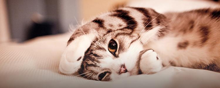 送给猫奴的福利·吸猫成瘾,无法自拔