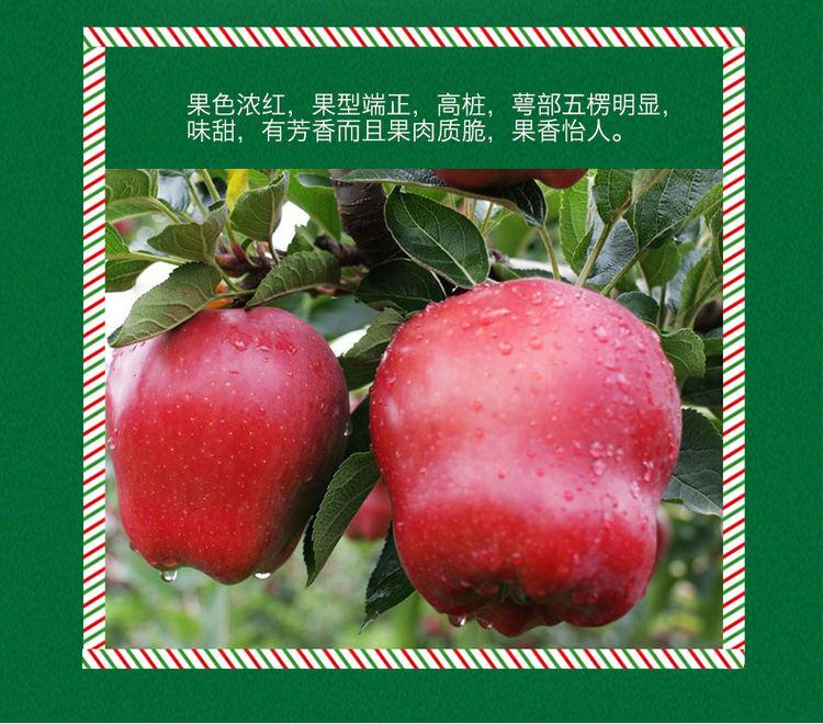 圣诞平安果单果礼盒装,圣诞限定零嘴杂货铺,这个月霸占你的胃