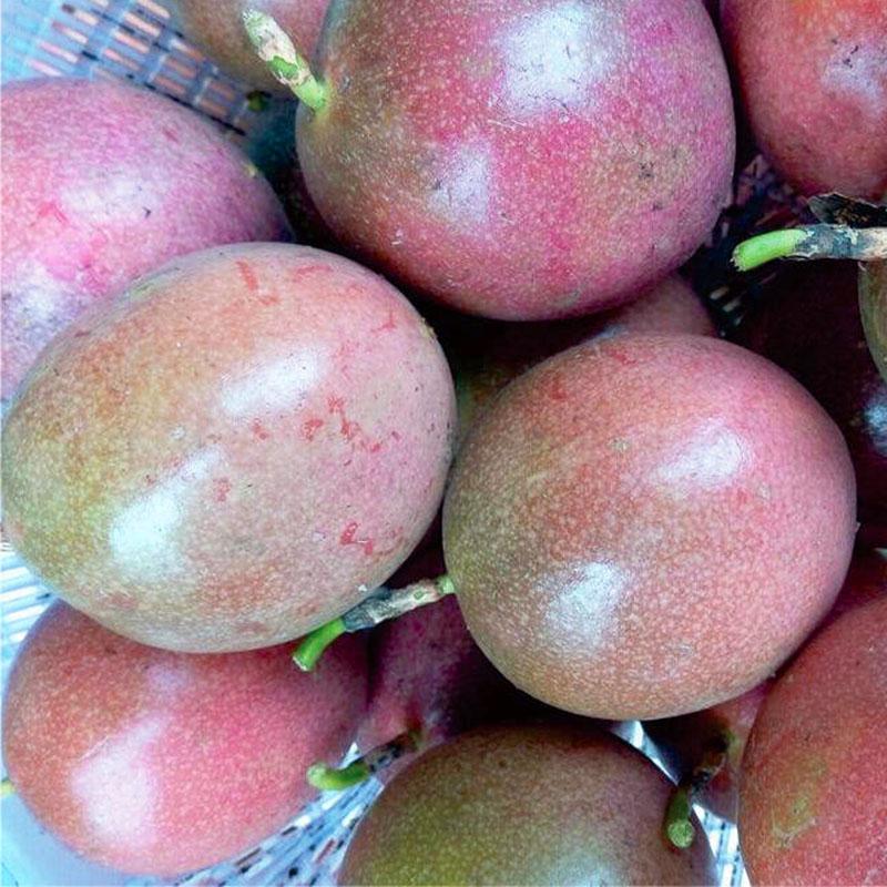 世果山现摘新鲜百香果2斤