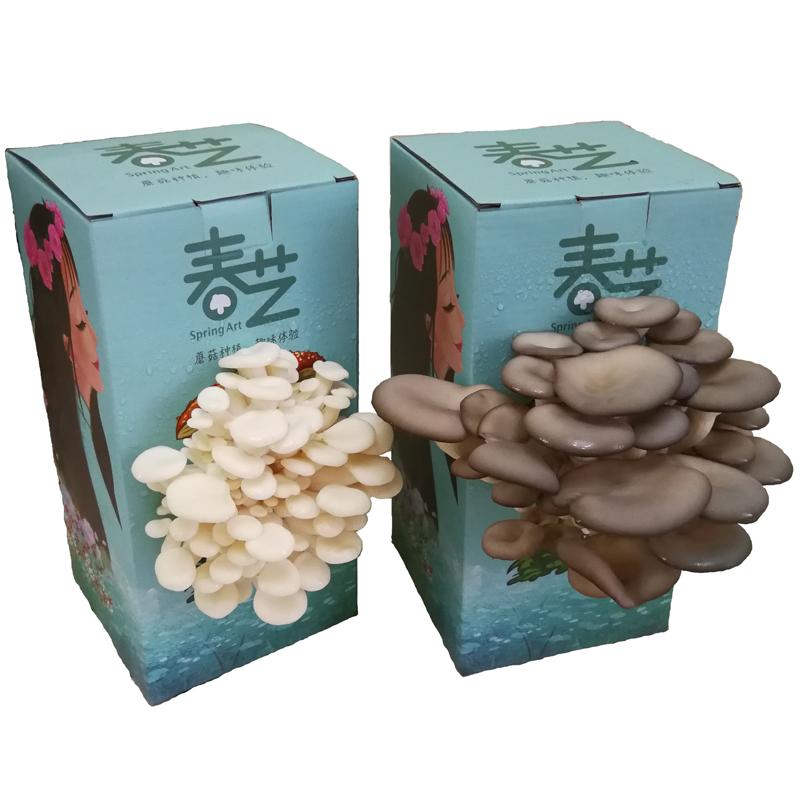 蘑菇盒子种植食用菌
