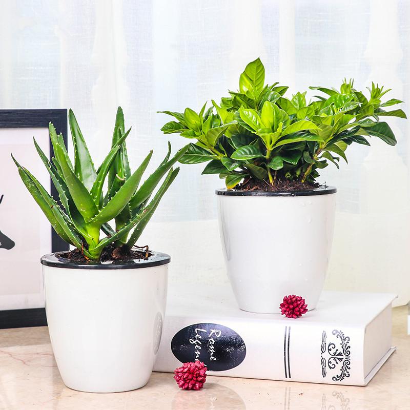 室内花卉盆栽
